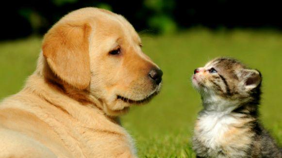 jak-pies-z-kotem
