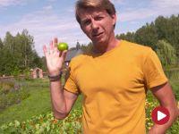 Okrasa łamie przepisy – W podlaskim ogrodzie ziołowym