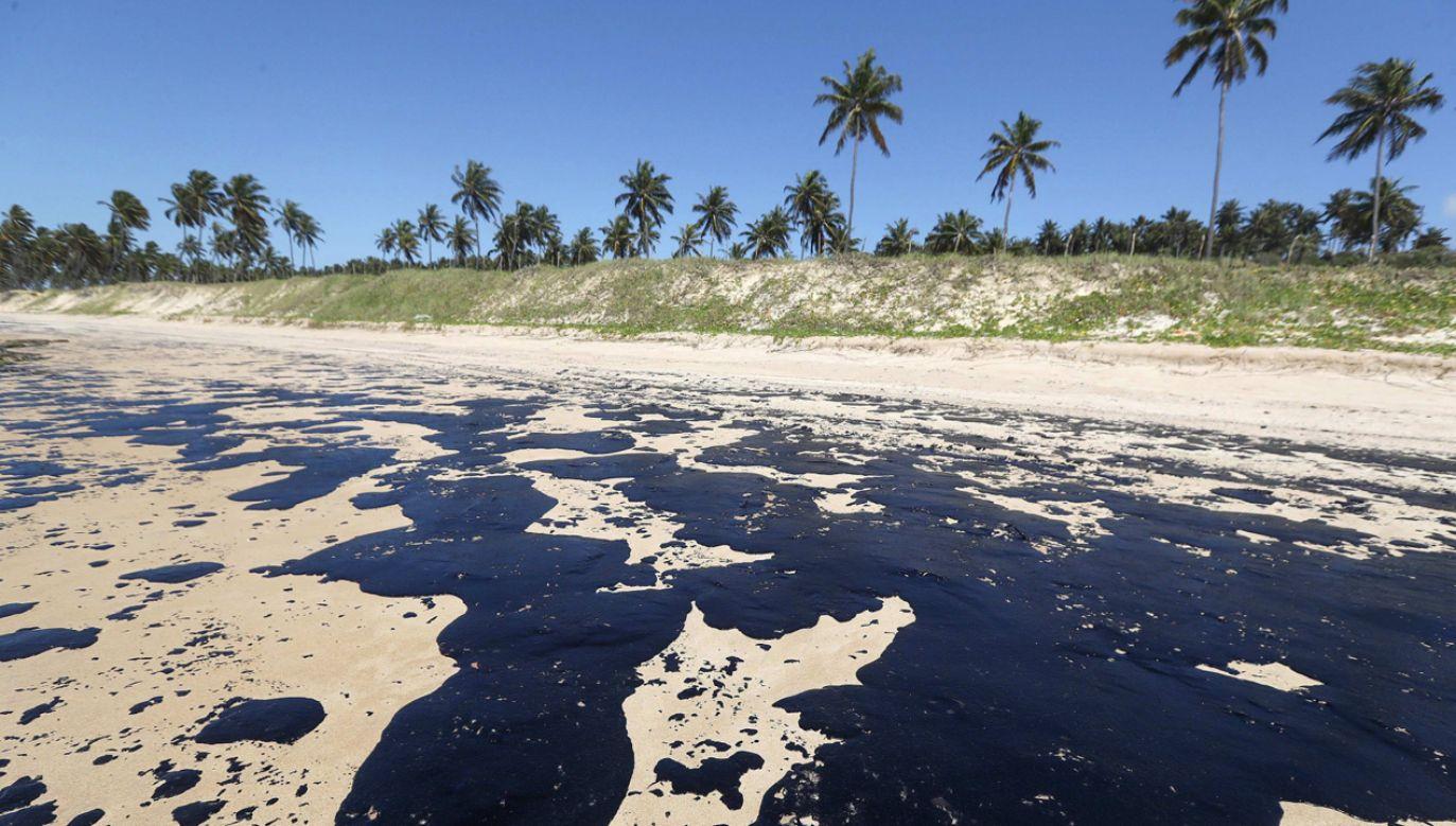 Zanieczyszczenie wód zagraża wielu gatunkom fauny i flory morskiej(fot. PAP/EPA/Carlos Ezequiel Vannoni)