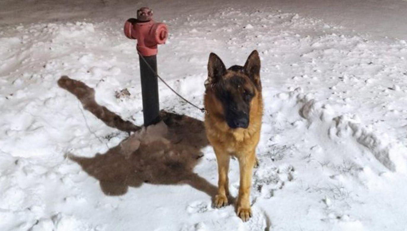 Pies był zmarznięty i wystraszony, ale przyjazny (fot. Policja)