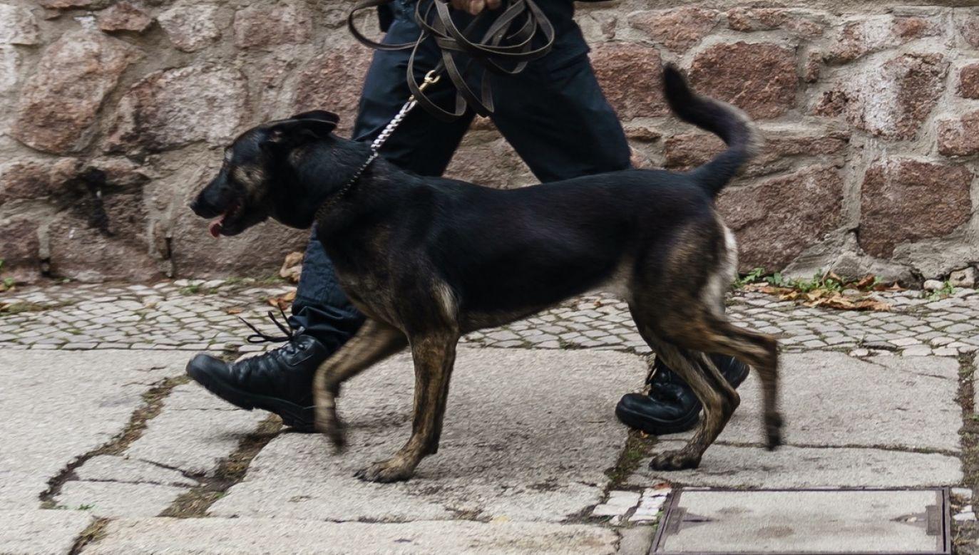 W służbach mundurowych psy wykorzystuje się do akcji ratunkowych i zwiadu (fot. PAP/EPA/CLEMENS BILAN)
