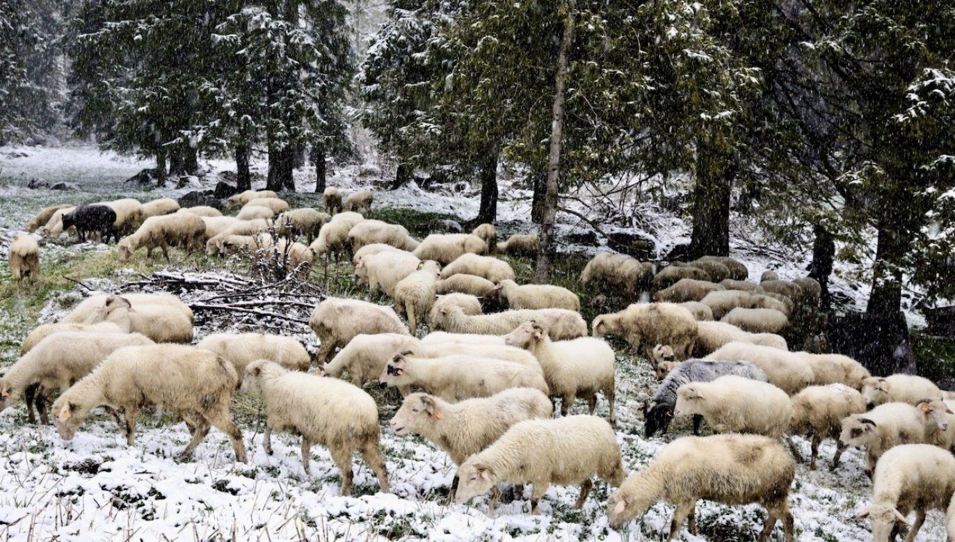 Instytut zaleca śledzenie komunikatów pogodowych (fot. PAP/Grzegorz Momot)