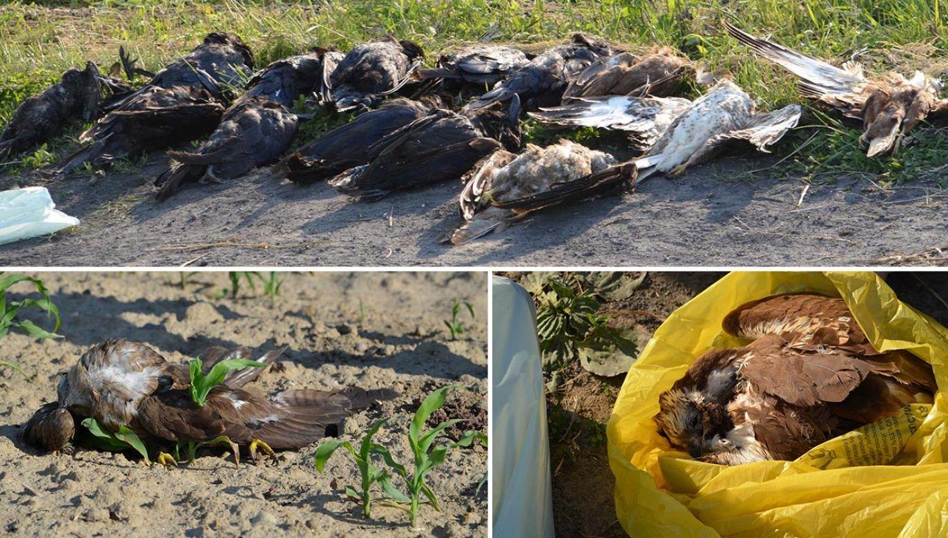 Wskutek otrucia zmarło kilkadziesiąt okazów (fot. Facebook/Schronisko dla Zwierząt Krotoszyn)