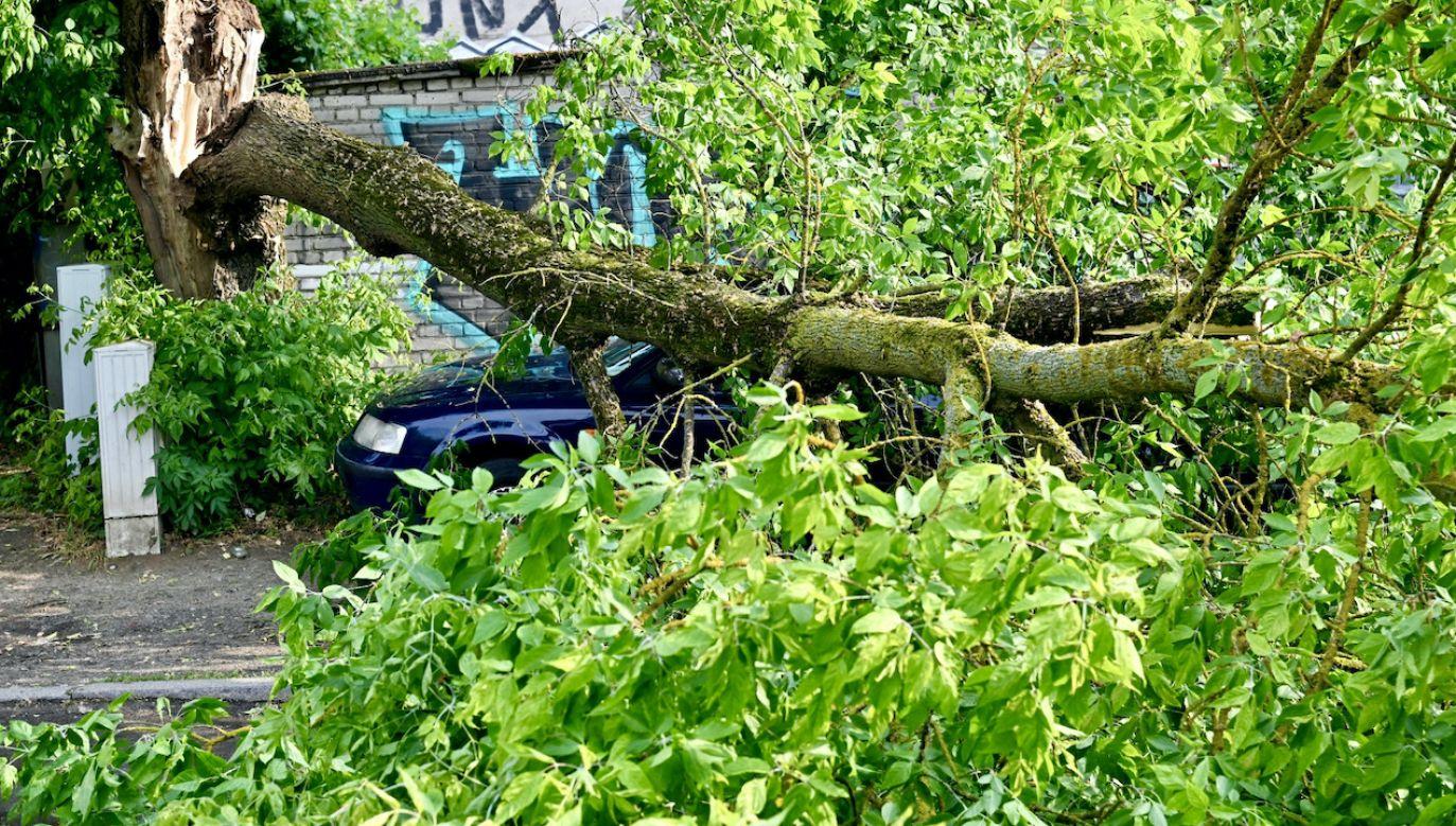 Zgłoszenia dotyczyły m.in. połamanych gałęzi, czy powalonych drzew (fot. PAP/Marcin Bielecki, zdjęcie ilustracyjne)