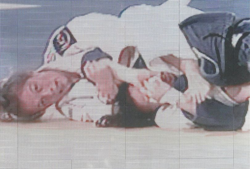 Premier Rosji Władimir Putin w trakcie ME w judo (fot.PAP/EPA)