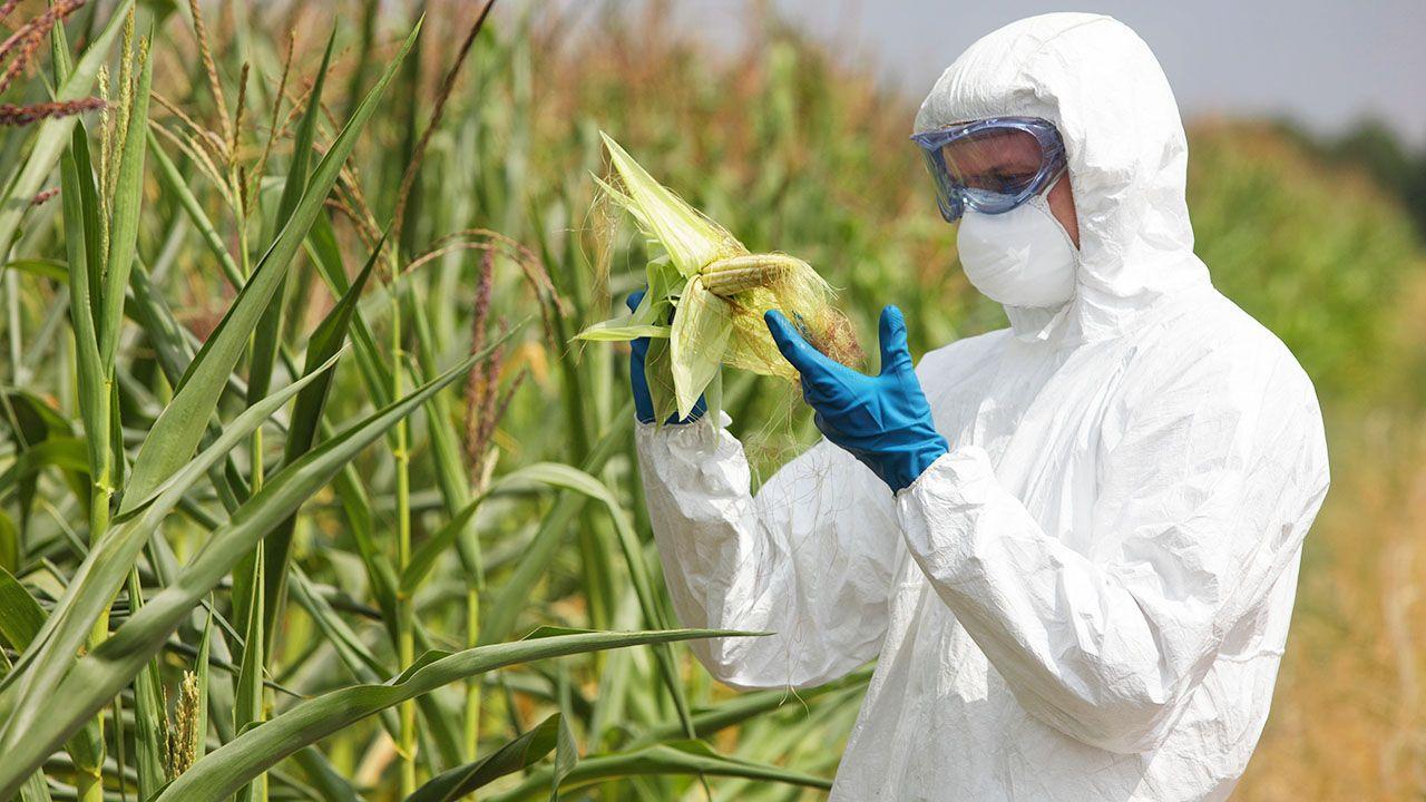 Szef resortu rolnictwa zapowiedział, że niedługo wprowadzone zostanie dobrowolne oznaczenie produktów wolnych od GMO (fot. Shutterstock/Marcin Balcerzak)
