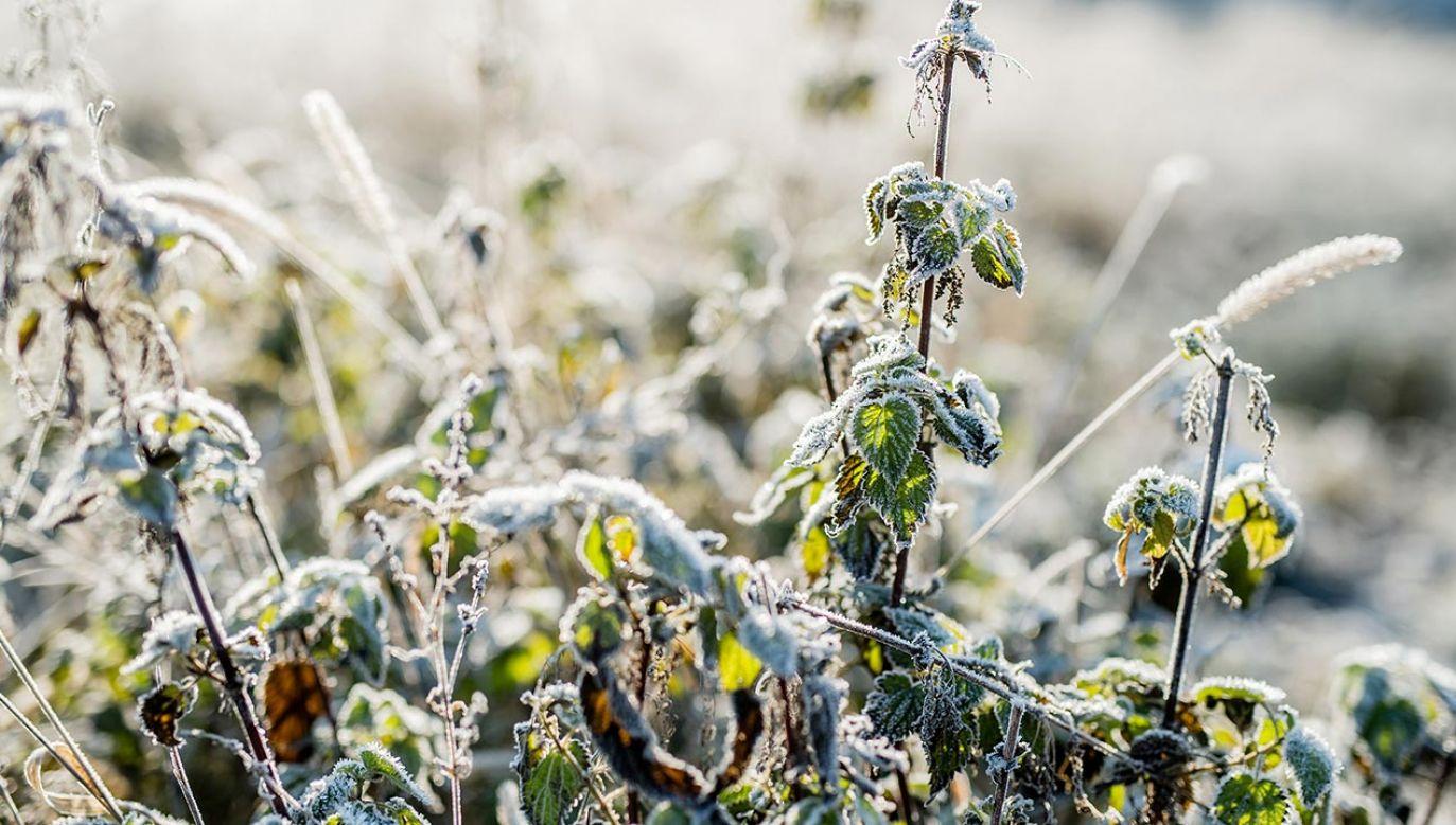 Temperatura przy gruncie spadnie do około -2 st. C (fot. Forum/ Daniel Dmitriew)